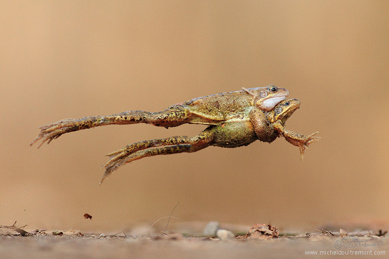 Photograph Big Jump by Michel d'Oultremont on 500px