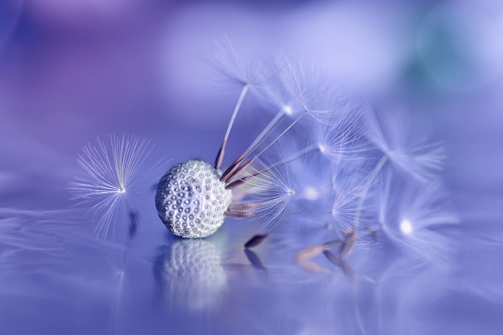 Photograph Airy Dance by Lafugue Logos   on 500px