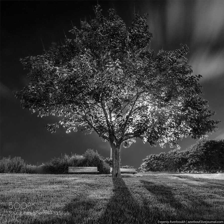 Tree of Life by Evgeniy Averboukh on 500px.com