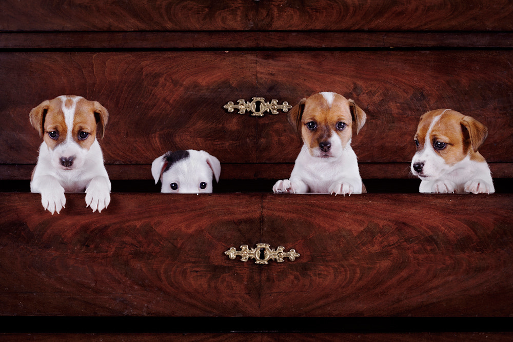Photograph Puppy Dresser by Line Madsen on 500px