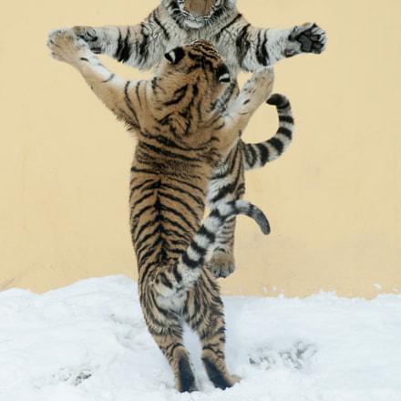 Tigertanz