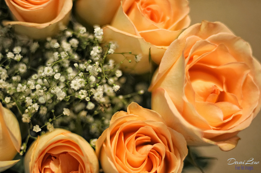 Photograph Top view of yellow rose flowers by Danielle Lewis on 500px