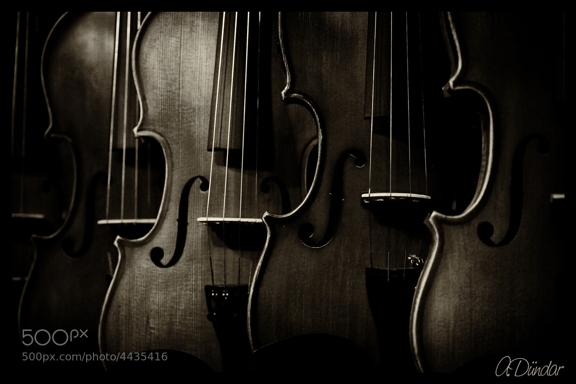 Photograph The Violinist by Wesp Wesp on 500px