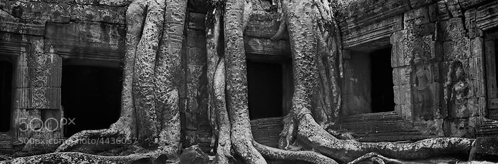 Photograph Ta Prohm Temple by Dean Tatooles on 500px