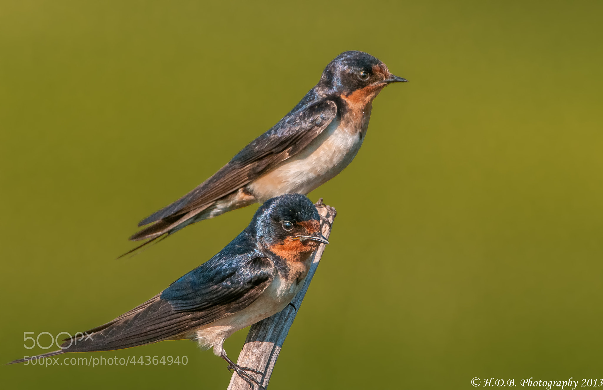 Photograph Two For One by Harold Begun on 500px