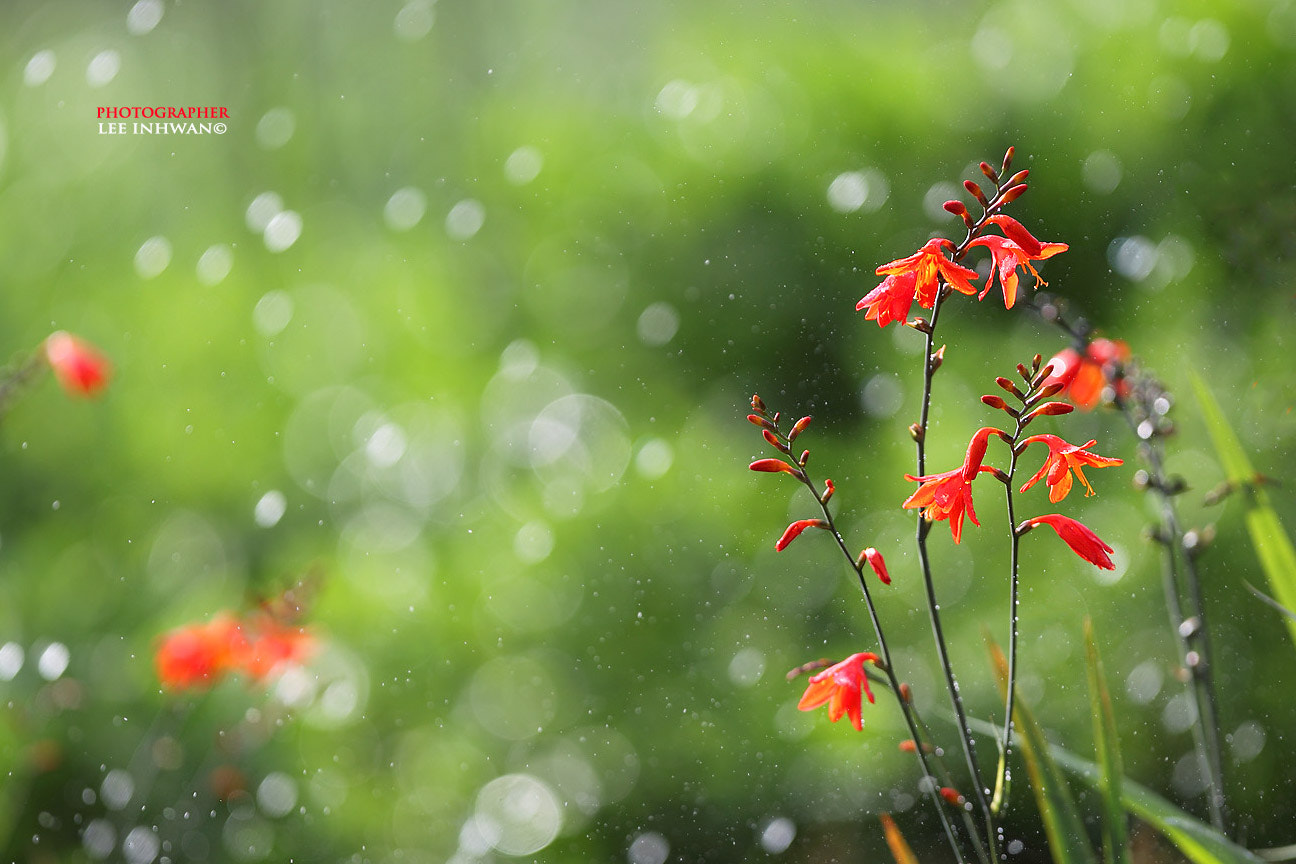 Photograph Morning water drops by LEE INHWAN on 500px