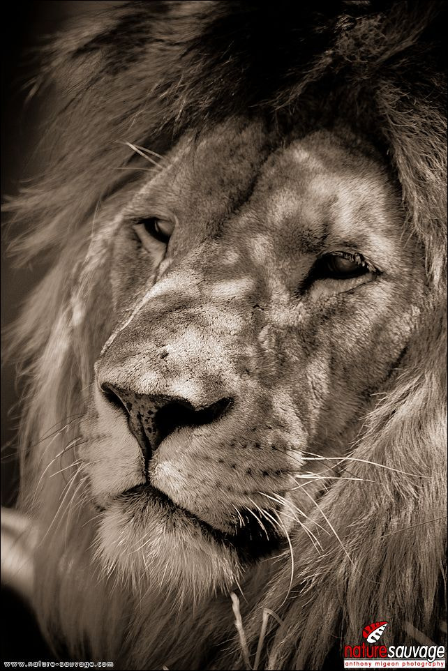 Photograph Majestic look by Anthony Migeon on 500px