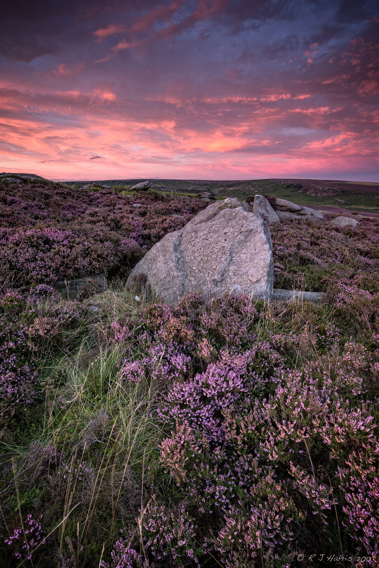 Photograph Rock on Heather by Rob Harris on 500px