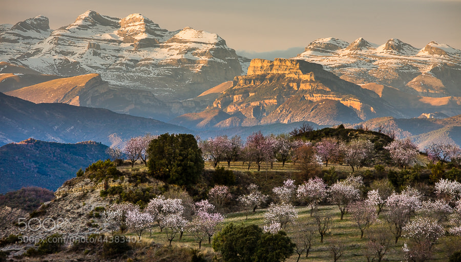 Photograph Early spring in the Pyrenees by Hans Kruse on 500px