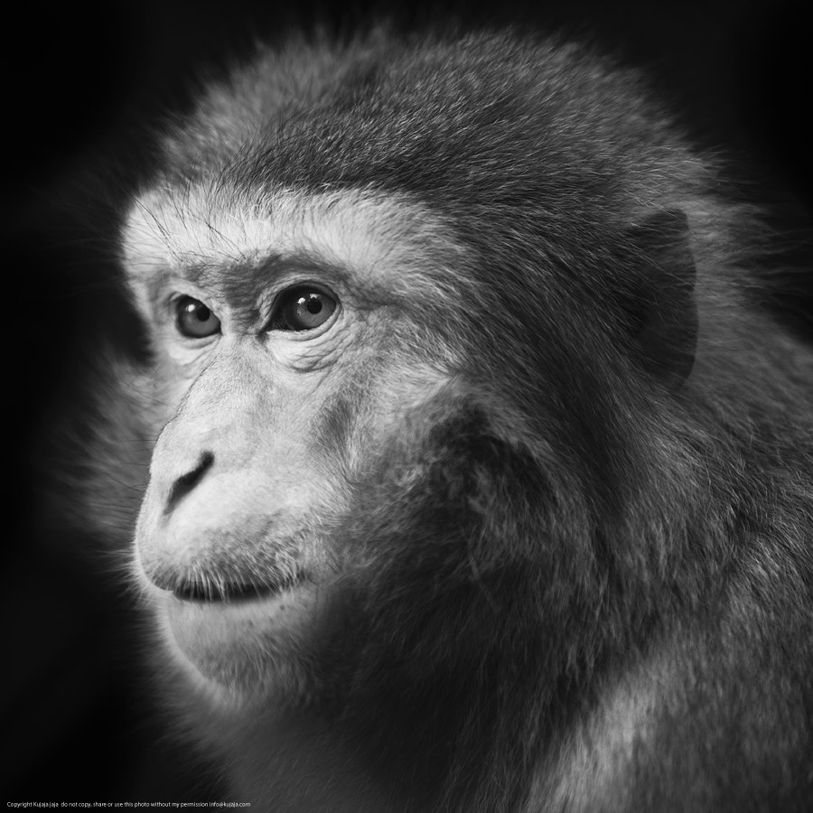Photograph Monkey by K J on 500px