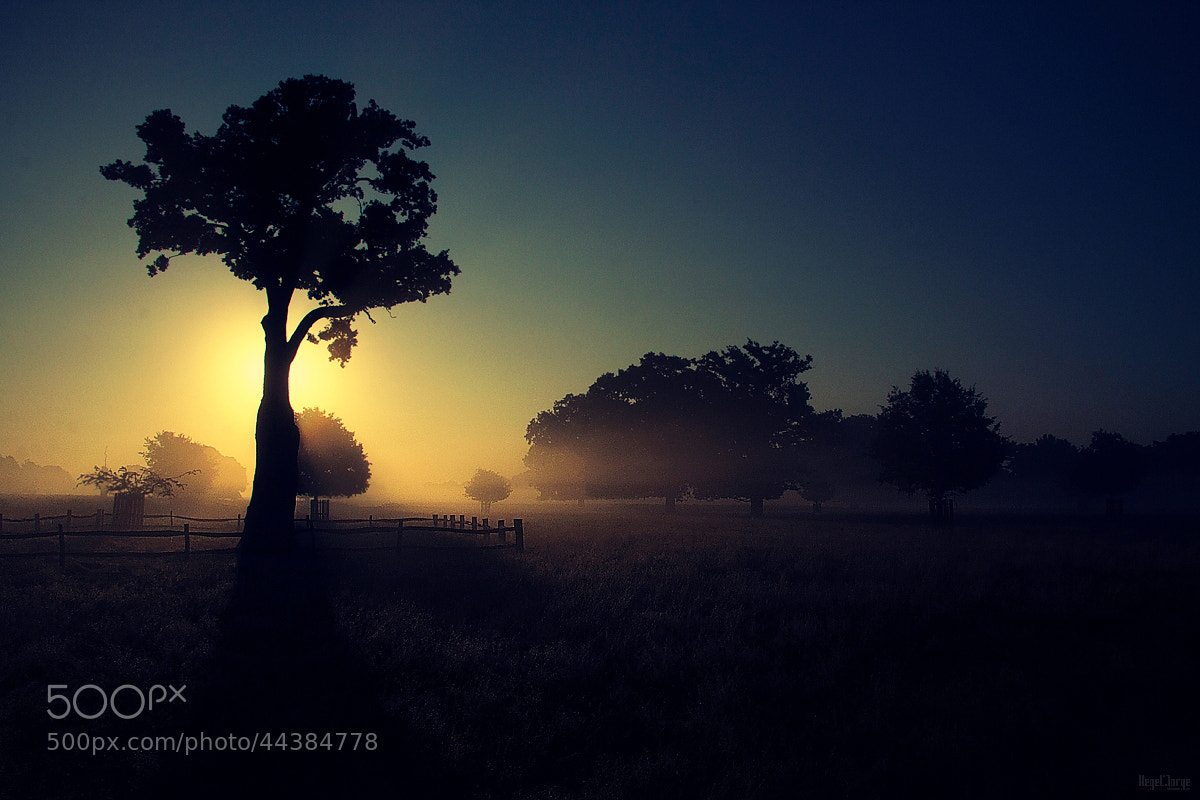 Photograph a piece of africa by Hegel Jorge on 500px