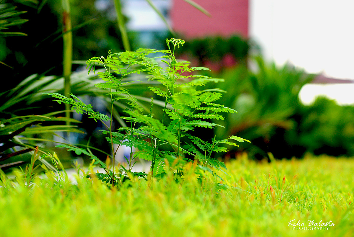 Photograph Small Green Plants in UP by Kiko Balasta on 500px