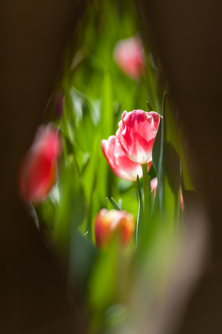 Photograph Peep hole by Daniel Beresford on 500px