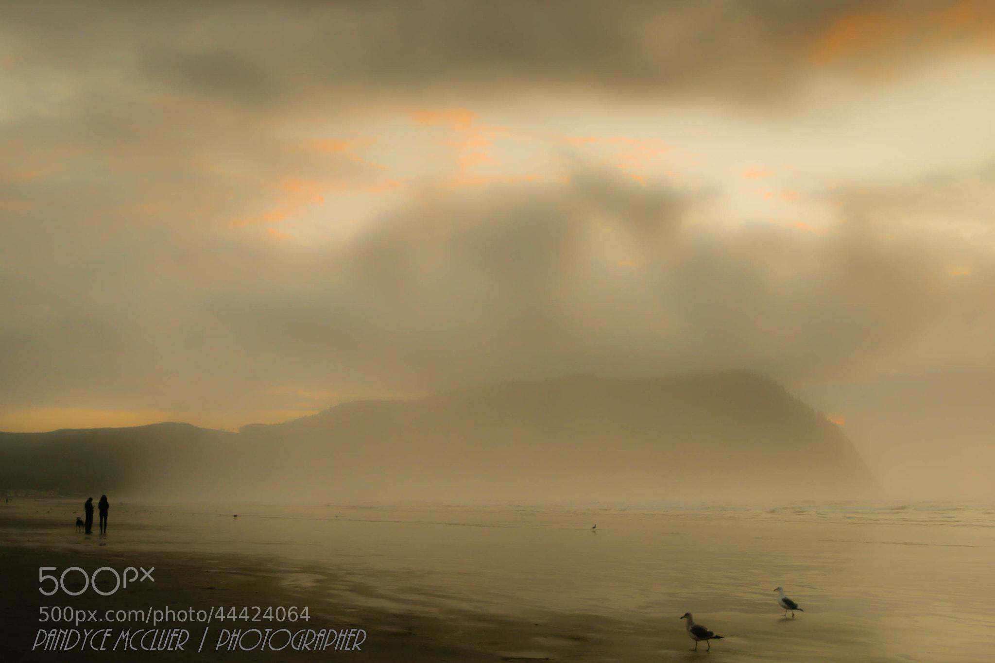 Photograph Foggy Beach Strollers by Pandyce McCluer on 500px