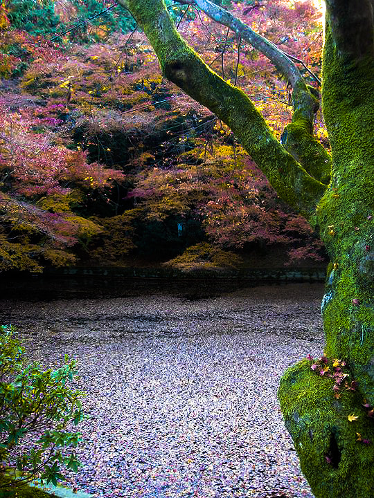 Photograph Kyoto, Japan by Q.S. Abbas on 500px