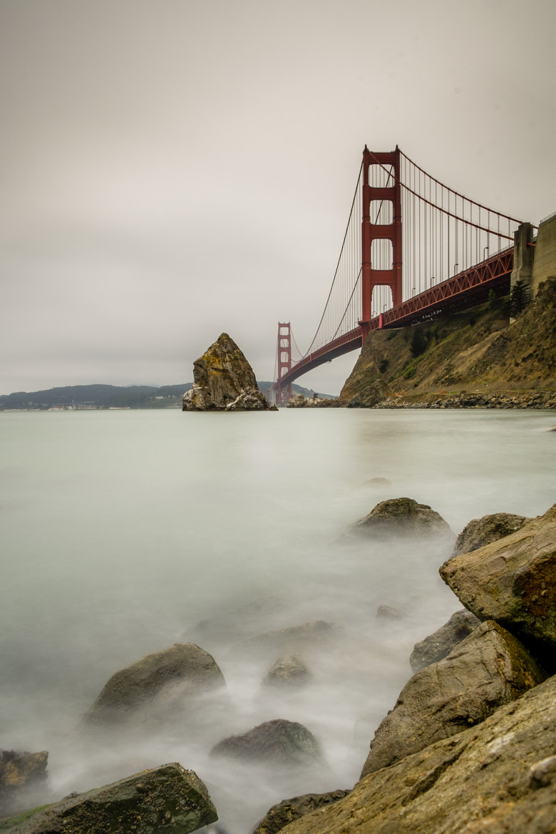 Photograph SF#4 - Golden and Fluffy by Jérôme Gauthié on 500px