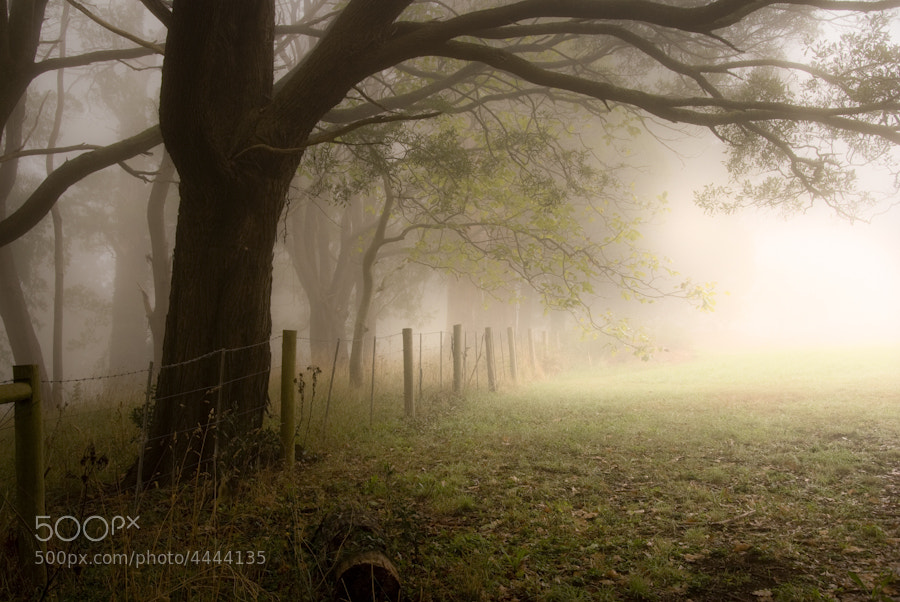 Photograph One Tree Hill by Nathan Kaso on 500px