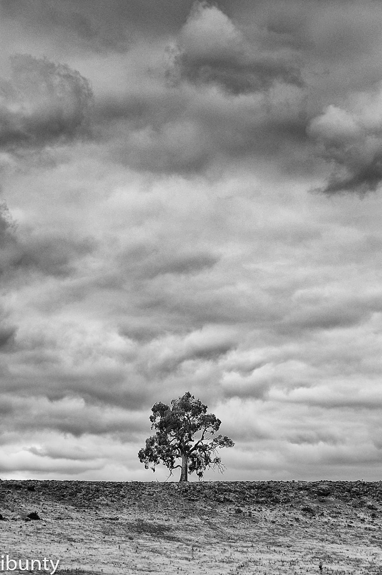 Photograph Tree by i500 ... on 500px