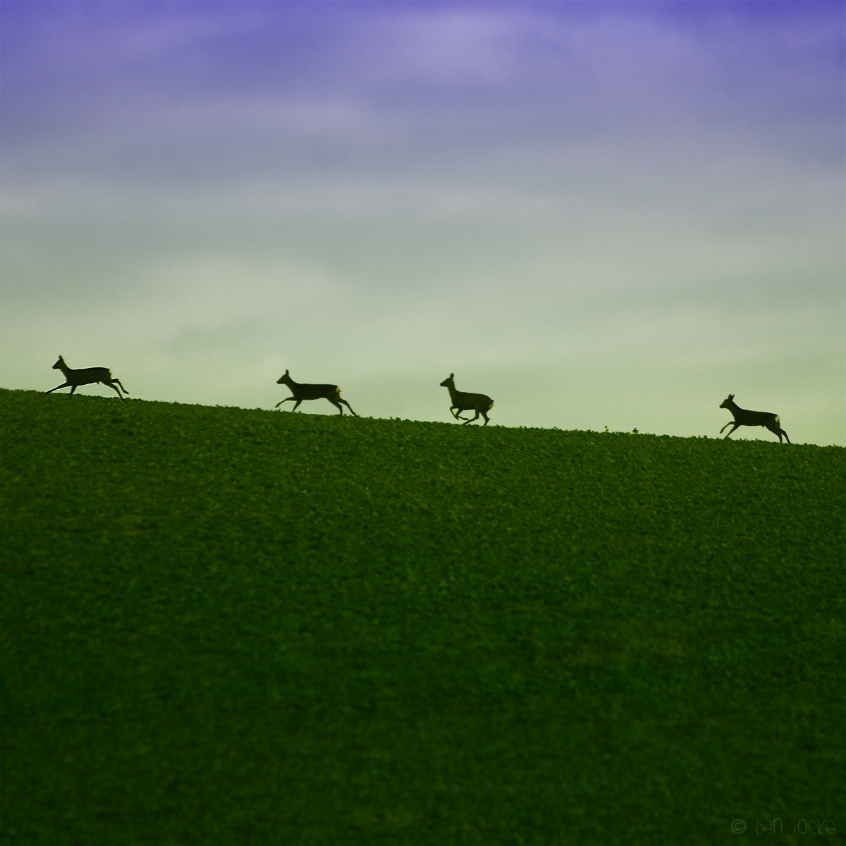 Photograph A Row Of Roe by Ben Locke on 500px