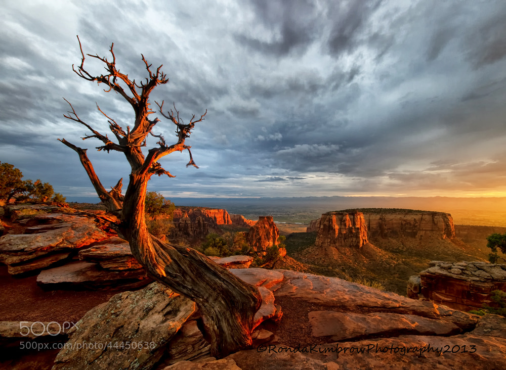 Photograph Light on the Crooked Old Tree by Ronda Kimbrow on 500px