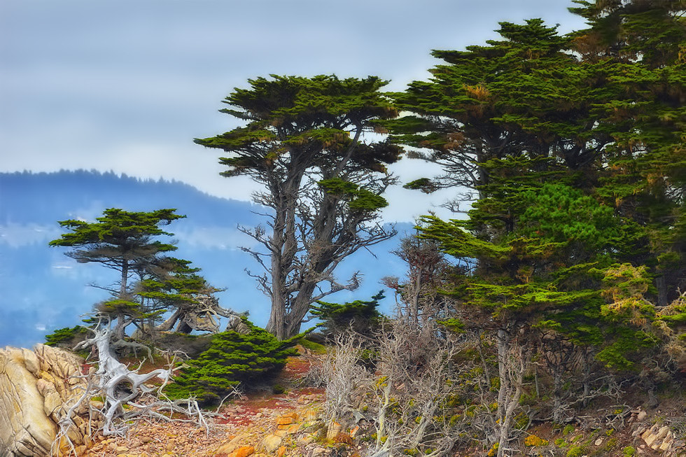 Photograph Carmel by Greg McLemore on 500px