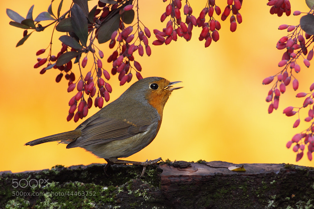Photograph small song by Hencz Judit on 500px