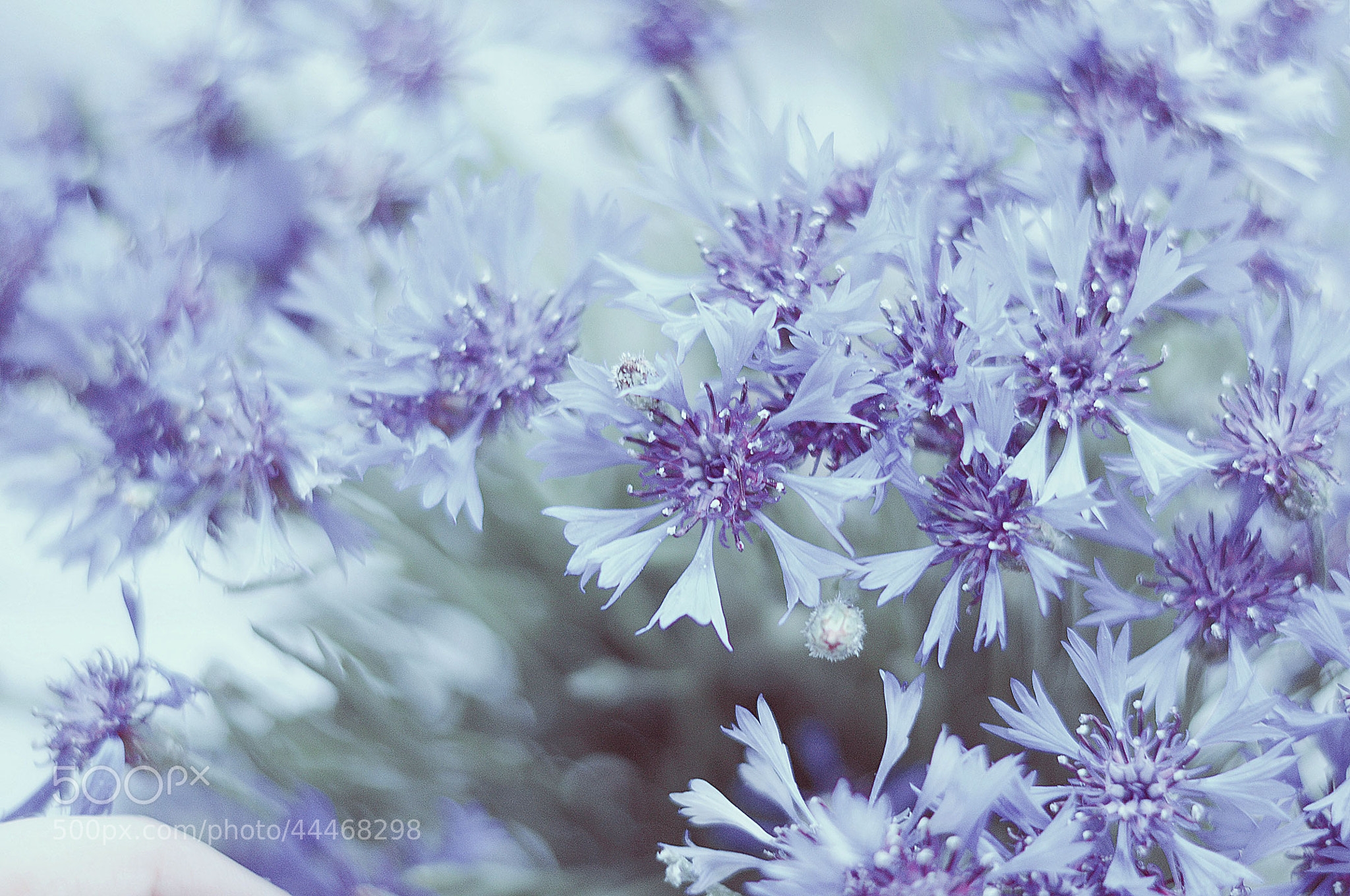 Photograph blue by Maria Torgashova on 500px