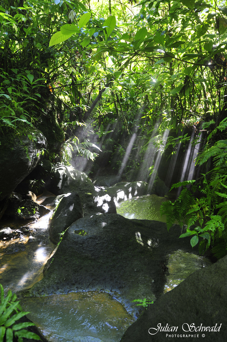Photograph Light rays in the rainforest of Dominica by Julian Schwald on 500px