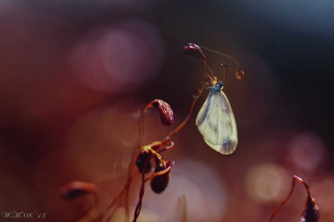 Photograph Nymph by Wil Mijer on 500px