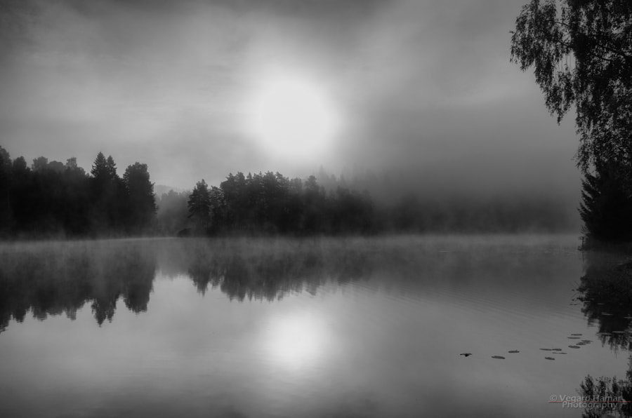 Photograph Morning mist by Vegard Hamar on 500px