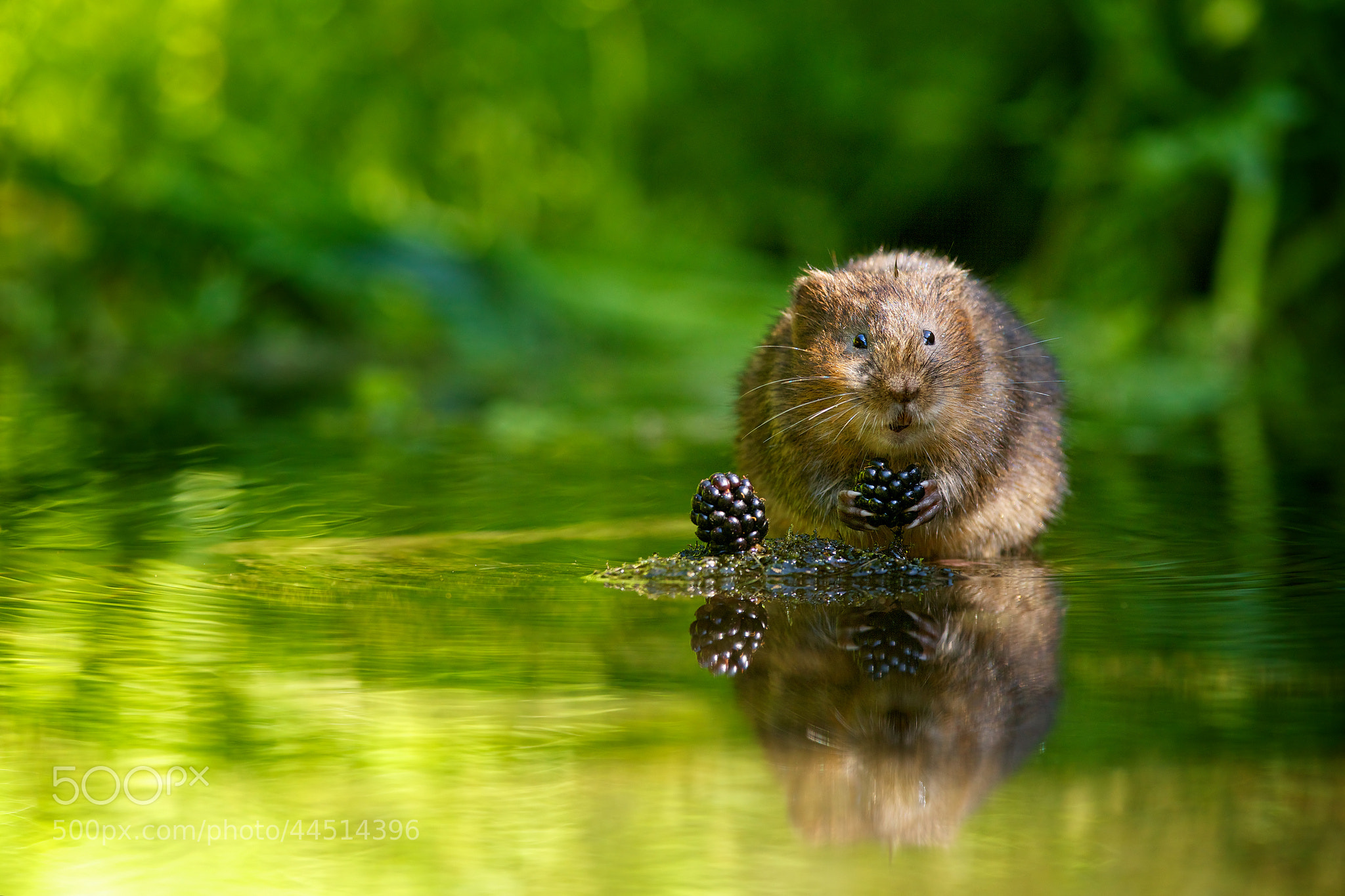 Photograph tiny thief by Mark Bridger on 500px