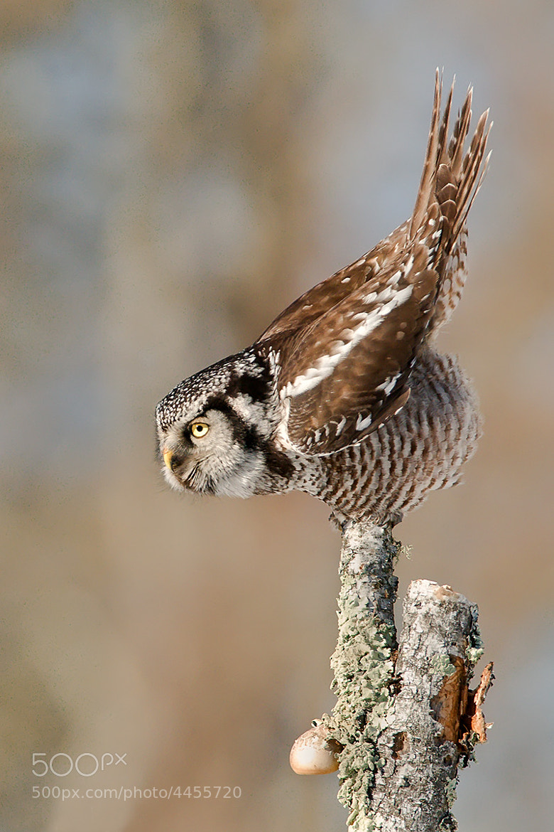Photograph Take off! by Mike  Lentz on 500px