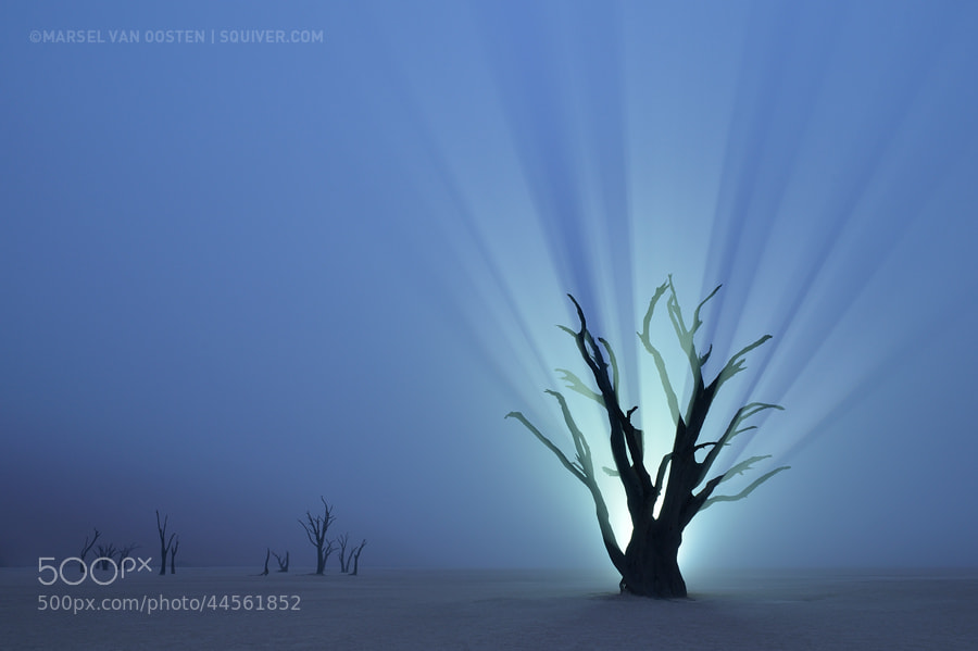 Photograph Resurrection by Marsel van Oosten on 500px