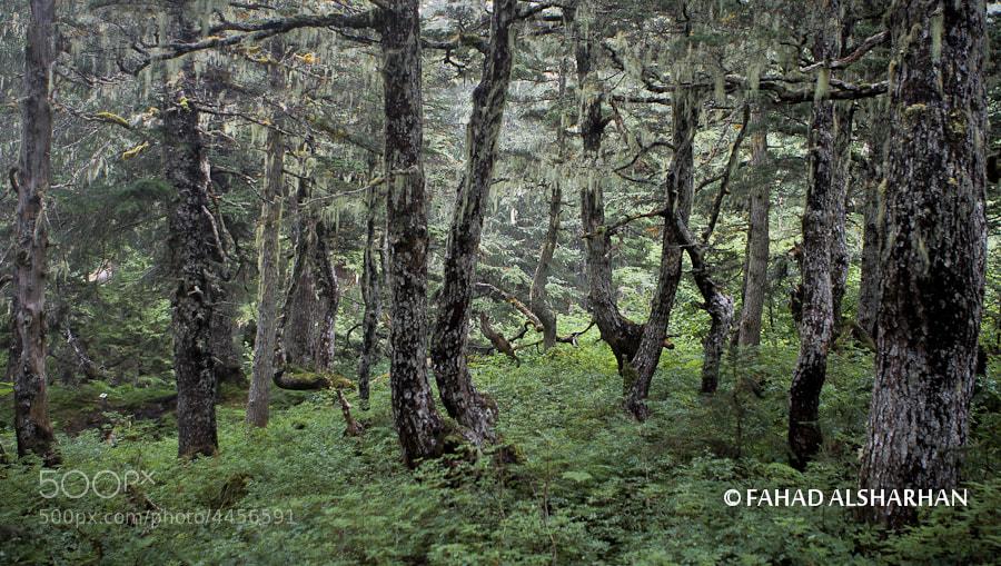 A walk through the woods in Juneau, Alaska.