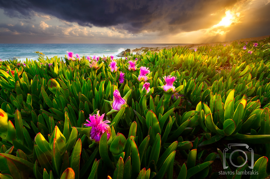 Photograph A Dream Of Spring by Stavros Lambrakis on 500px