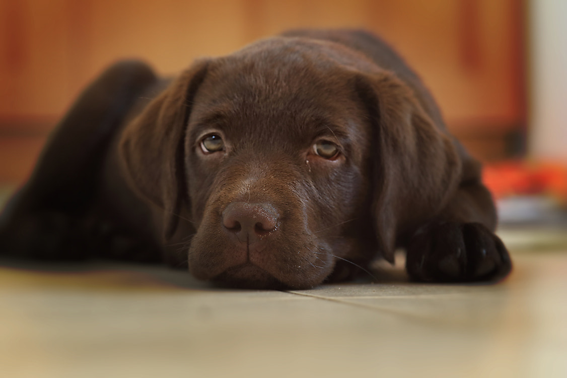 Photograph Dog Tired by Ceri Jones on 500px