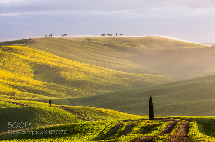 Photograph Tuscan morning misty feeling by Hans Kruse on 500px