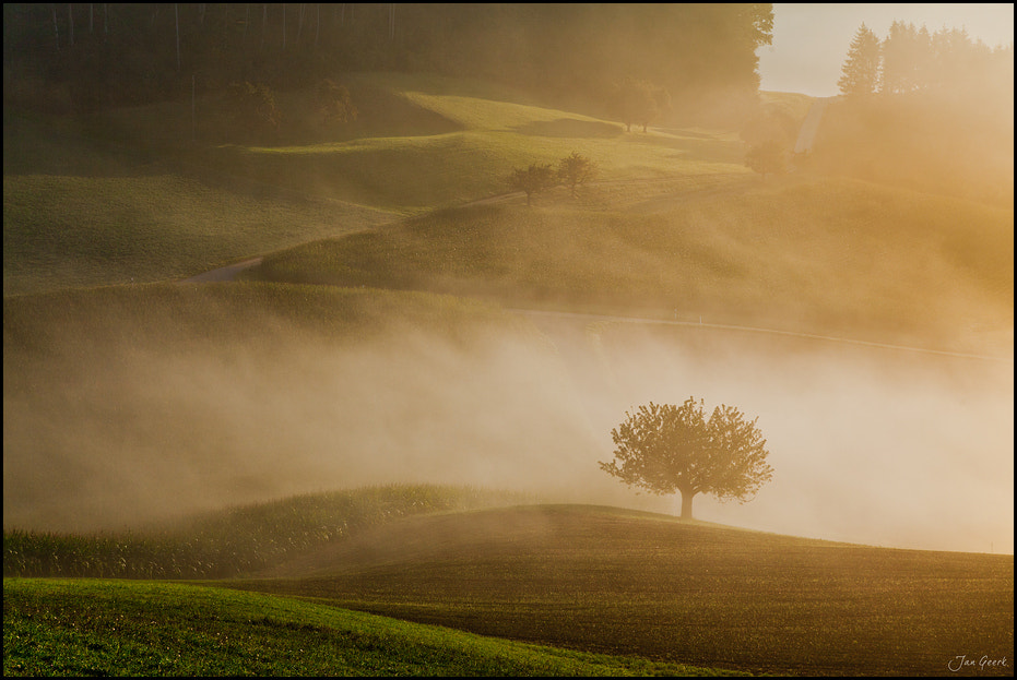 Photograph Light and Fog by Jan Geerk on 500px