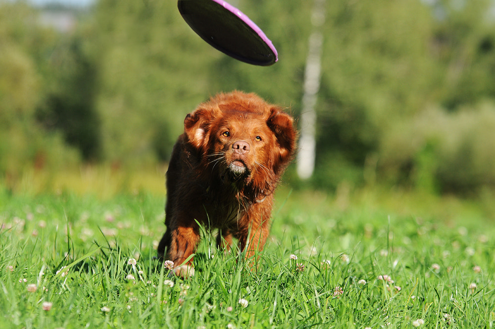 Photograph Frisbee by Anne Geier on 500px