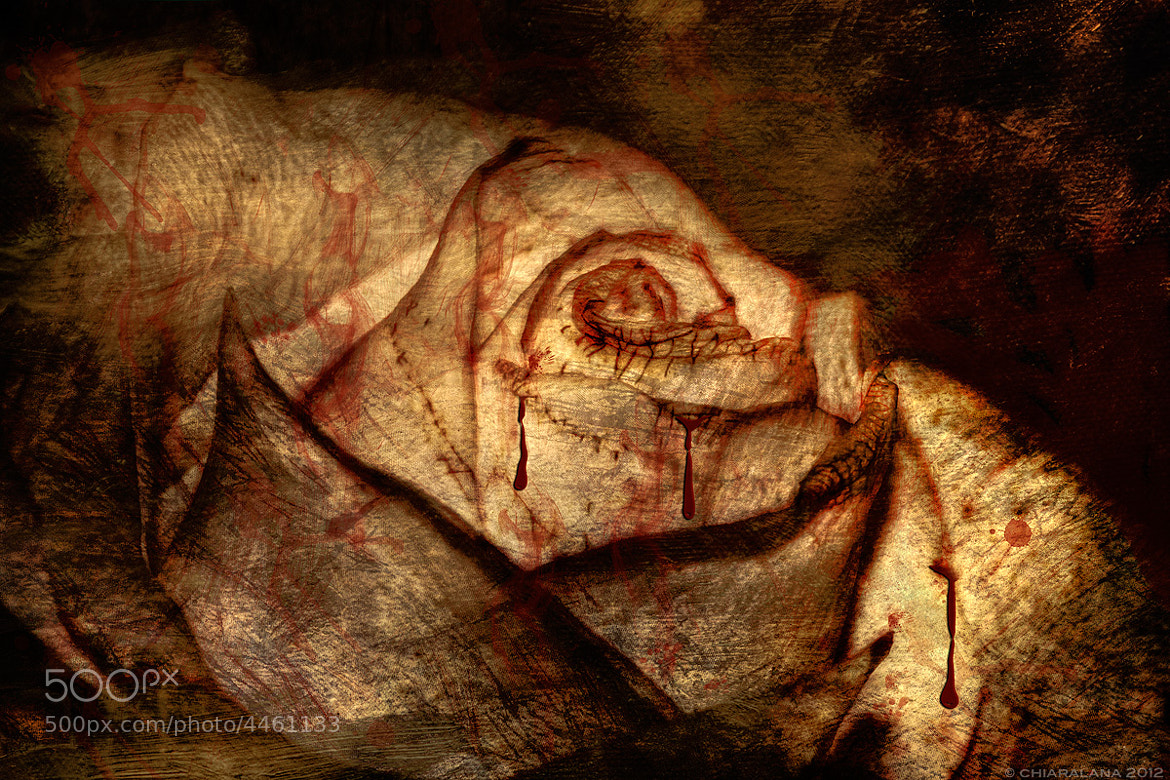 Photograph Rose, Anger and Blood by Chiara Lana on 500px