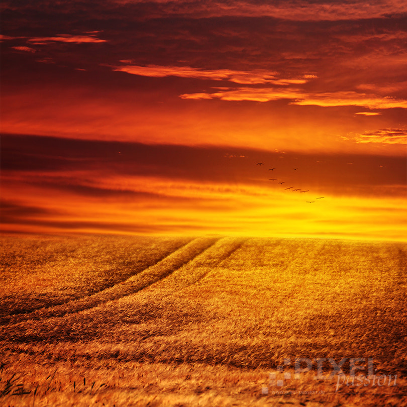 Photograph on fire by Pixel Passion on 500px