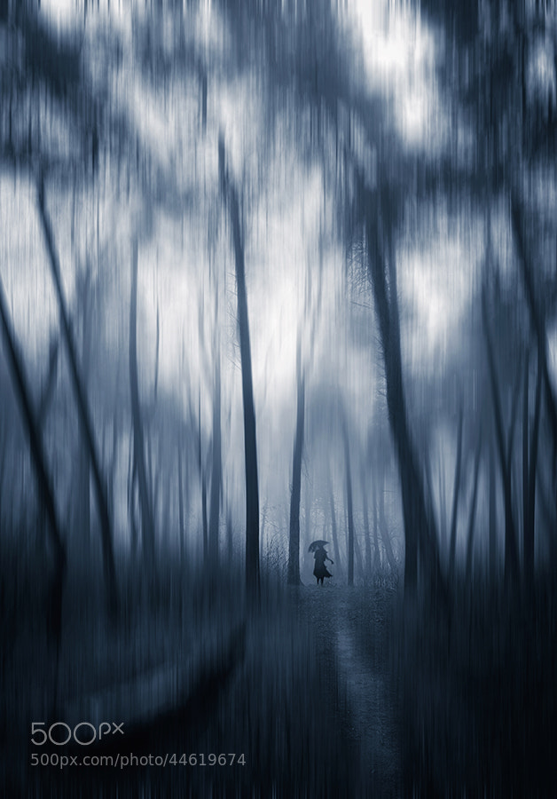 Photograph Dream in forest by DimoKey  on 500px