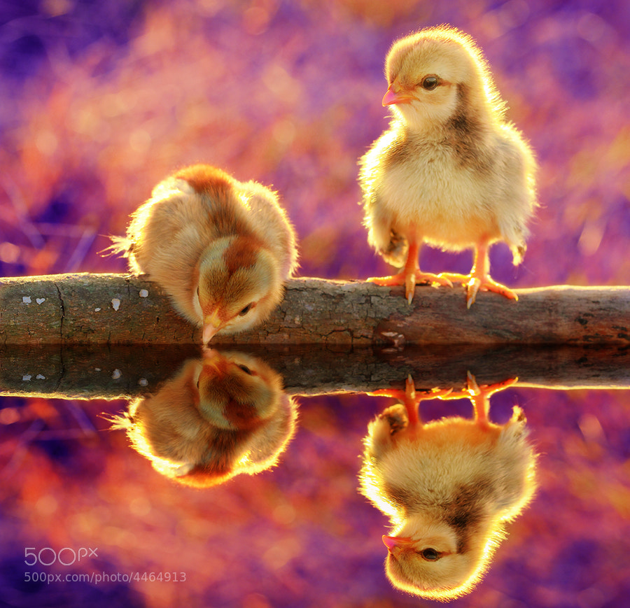 Photograph Untitled by Prachit Punyapor on 500px