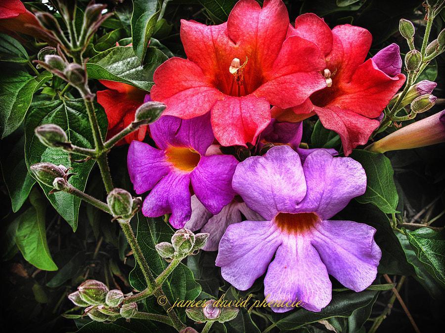 Colorful Trumpets