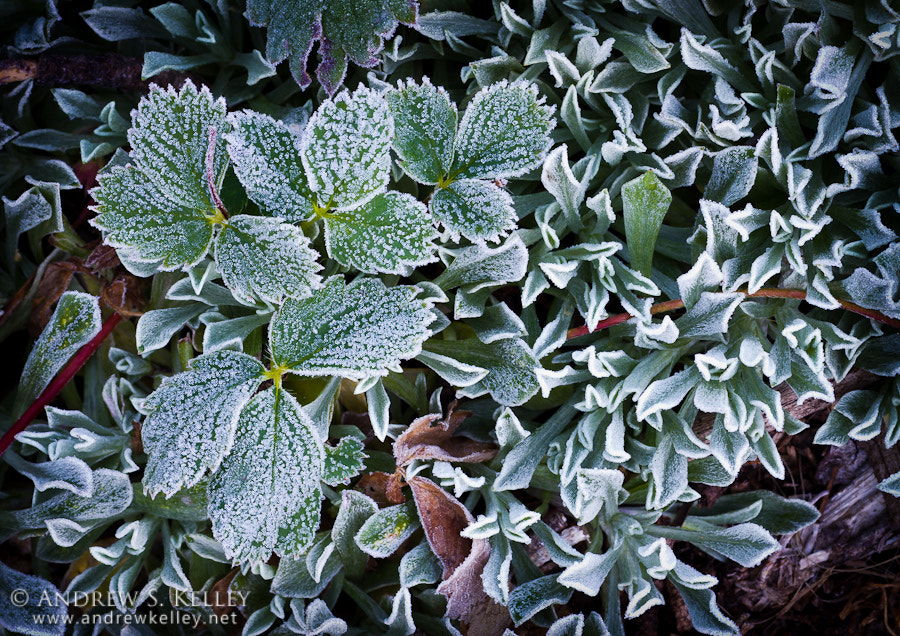 Photograph Frost on the Forest Floor by Andrew Kelley on 500px