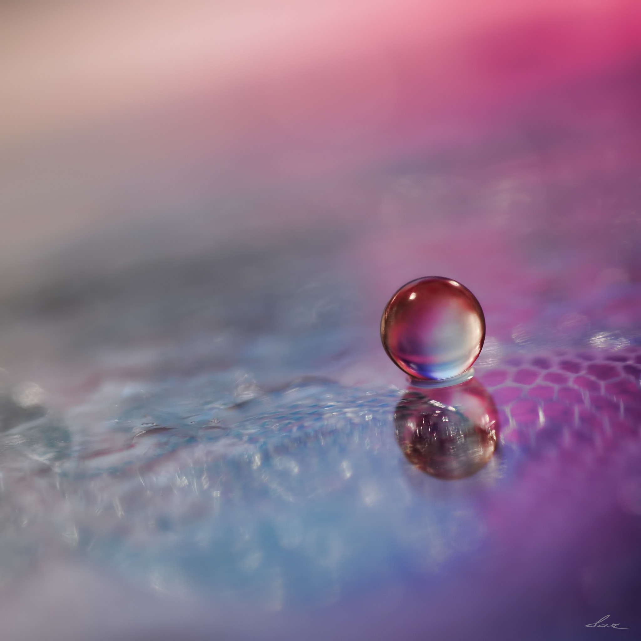 Photograph Delicate by Dax  on 500px