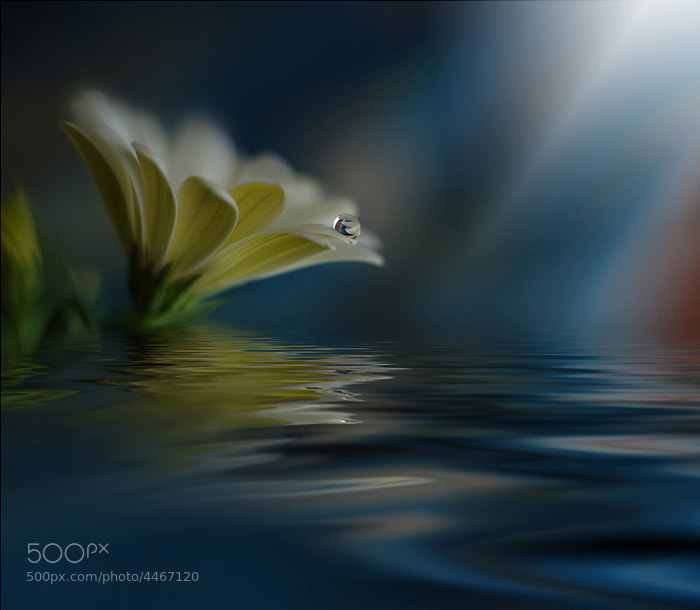 Photograph :::Another World::: by Juliana Nan on 500px