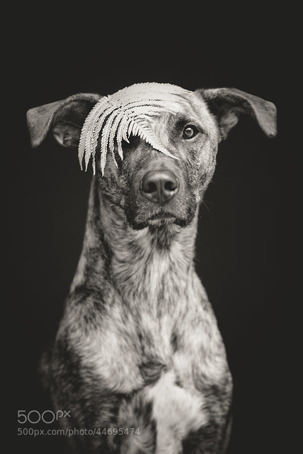Photograph Fernyolee by Elke Vogelsang on 500px