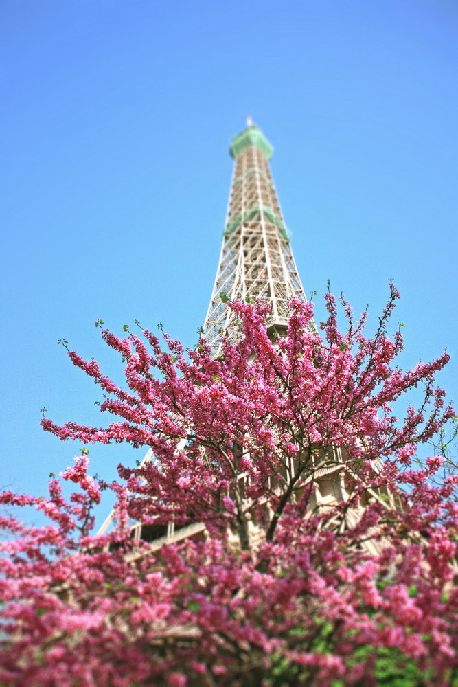 Photograph spring in paris by Dara Pilyugina on 500px
