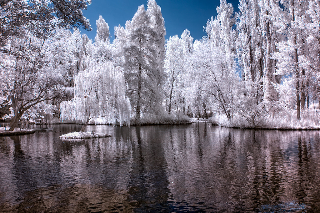 Photograph Infrared by Mario Cangelli on 500px